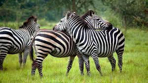 Best National Parks in Uganda 2021 Top 10 List
