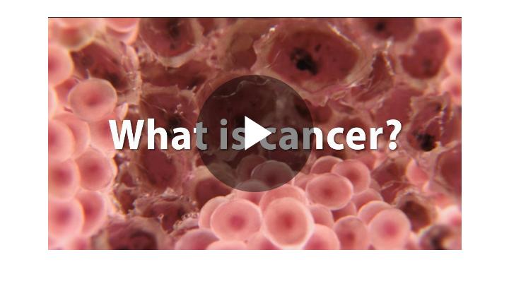 5 World Deadliest Cancer 2019 2020 – Clip