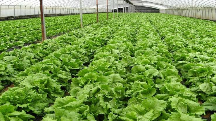 Most Marketable Agricultural Courses In Uganda 2020