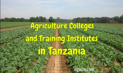 Agriculture Colleges in Tanzania 2020 Training Institutes