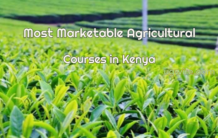 Most Marketable Agricultural Courses in Kenya