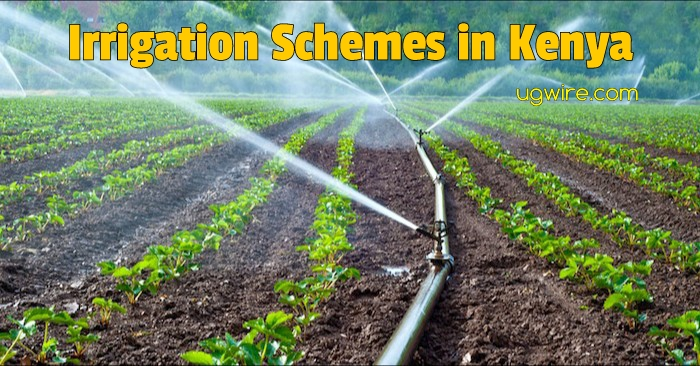 Irrigation schemes in Kenya and crops grown pdf List